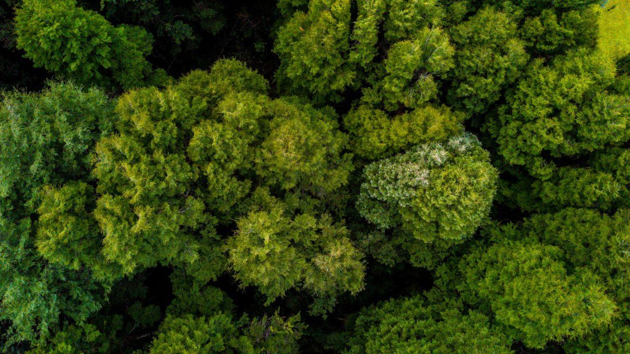Bosque Puelo